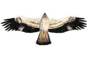 Booted Eagle Wingspan.